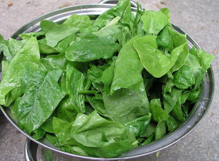 Folhas de espinafre, alimento erroneamente conhecido como um dos mais ricos em ferro. Imagem: Nillerdk/Creative Commons